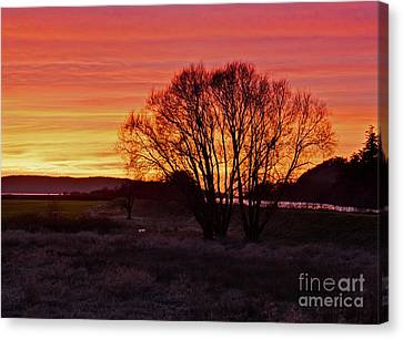 Winter Tree With Red Sky Canvas Print by Valerie Garner