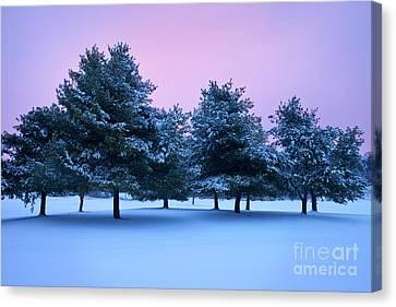 Winter Trees Canvas Print by Brian Jannsen
