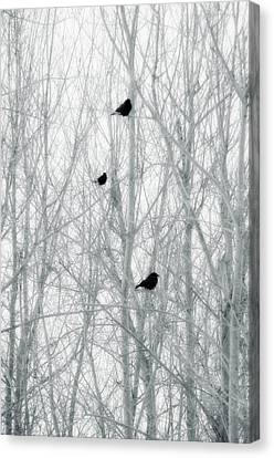 Winter Trees Canvas Print by Gothicolors Donna Snyder