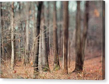 Winter Trees Canvas Print by Kim Fearheiley