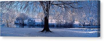 Winter Trees Perkshire Scotland Canvas Print by Panoramic Images