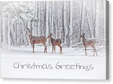 Winter Visits Card Canvas Print by Karol Livote