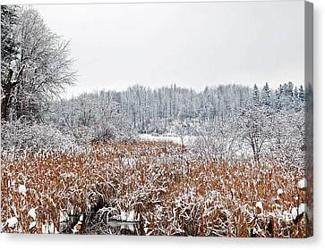 Winter White Landscape Canvas Print by Aimee L Maher Photography and Art Visit ALMGallerydotcom