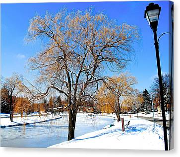 Winter Willow Canvas Print by Frozen in Time Fine Art Photography