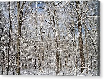 Winter Wonderland Canvas Print by Betsy C Knapp