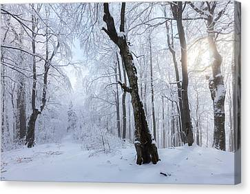 Winter Wood Canvas Print by Evgeni Dinev