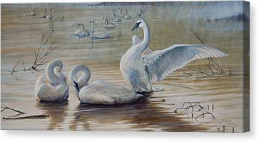 Wintering Trumpeters Canvas Print by Rob Dreyer AFC