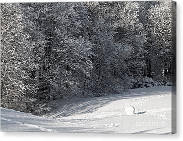Winterjoy Canvas Print by Lutz Baar