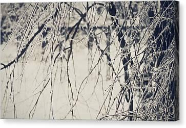 Winter's Gate Canvas Print by Susan Maxwell Schmidt