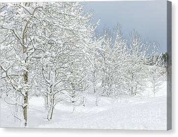 Winter's Glory - Grand Tetons Canvas Print by Sandra Bronstein