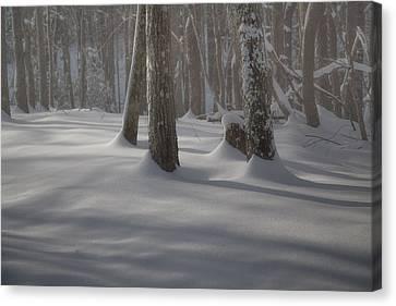 Winter's Light Canvas Print by Rob Travis