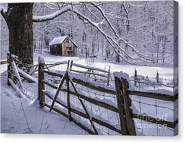 Winter's Mystique   Canvas Print by Thomas Schoeller