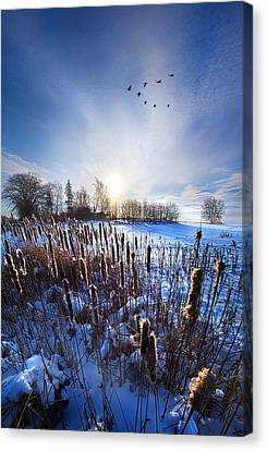 Wintertails Canvas Print by Phil Koch