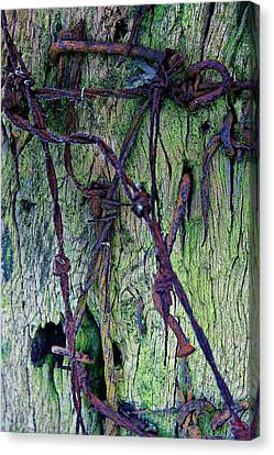Wired Canvas Print by David Davies