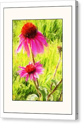Wisconsin Cone Flowers Canvas Print by Kelly Gibson