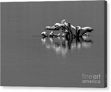 Wisconsin River Canvas Print by Steven Ralser