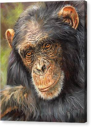 Wise Eyes Canvas Print by David Stribbling