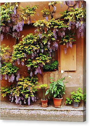 Wisteria On Home In Zellenberg 4 Canvas Print by Greg Matchick