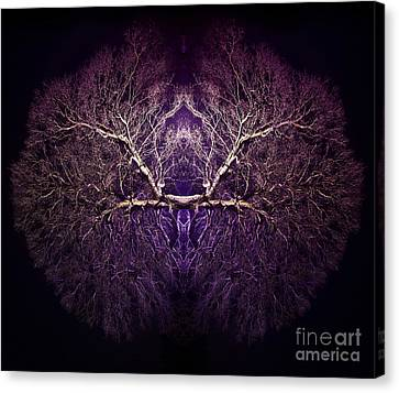 Within Canvas Print by Tim Gainey
