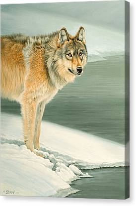 Wolf Portrait-lamar Valley  Canvas Print by Paul Krapf