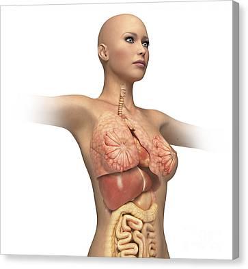 Woman Body Midsection With Interior Canvas Print by Leonello Calvetti