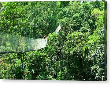 Woman On A Canopy Walkway Canvas Print by Miva Stock