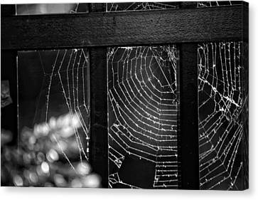 Wonder Web Canvas Print by Carrie Ann Grippo-Pike