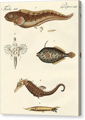 Wonderful Fish Canvas Print by German School