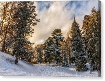 Wonderland Canvas Print by Mark Papke