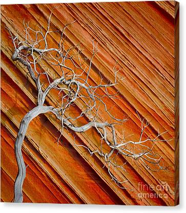 Wood And Stone Canvas Print by Inge Johnsson