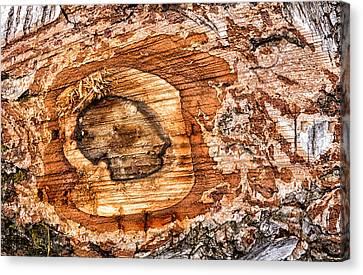 Wood Detail Canvas Print by Matthias Hauser