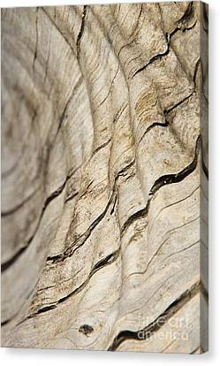 Wood Grain Grunge And Texture Canvas Print by Hermanus A Alberts