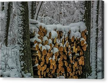 Wood Pile Canvas Print by Paul Freidlund