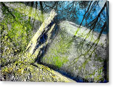 Wood Reflections Canvas Print by Olivier Le Queinec
