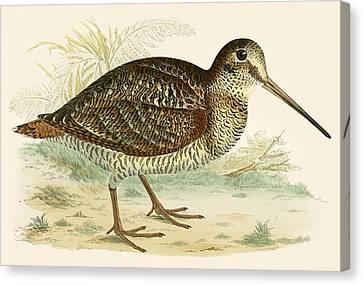 Woodcock Canvas Print by Beverley R Morris