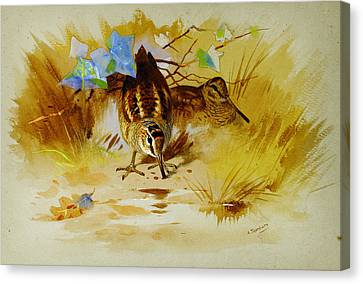 Woodcock In A Sandy Hollow Canvas Print by Celestial Images