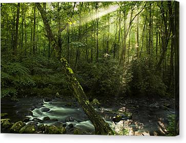 Wooded Rays Canvas Print by Andrew Soundarajan