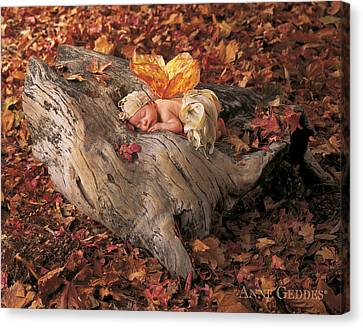 Woodland Fairy Canvas Print by Anne Geddes