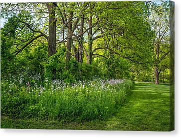 Woodland Phlox   Canvas Print by Steve Harrington