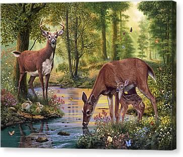 Woodland Stream Canvas Print by Steve Read