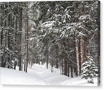 Woods In Winter Canvas Print by Eric Glaser
