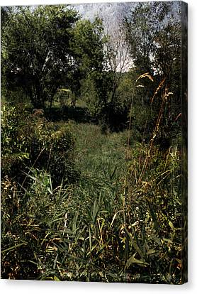 Woods Near My Home Canvas Print by Scott Kingery