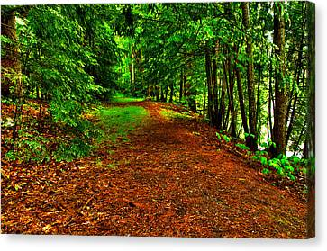 Maine Woods Path Canvas Print by Glenn Gordon