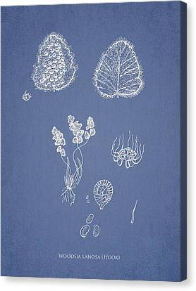 Woodsia Lanosa Canvas Print by Aged Pixel