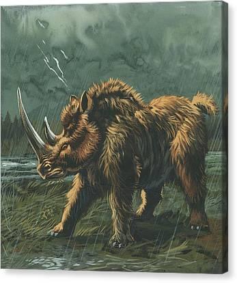 Woolly Rhinoceros Canvas Print by Deagostini/uig