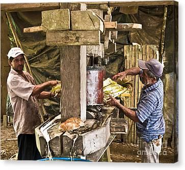 Working Hard For Sugar Canvas Print by Heiko Koehrer-Wagner