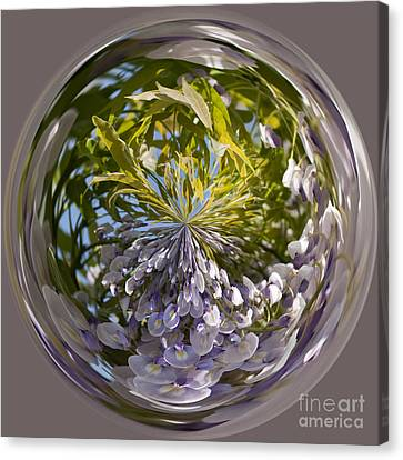 World Of Wisteria Canvas Print by Anne Gilbert