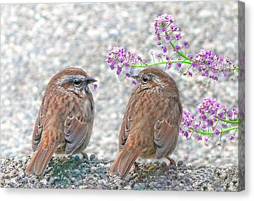 Wren Bird Sweethearts Canvas Print by Jennie Marie Schell