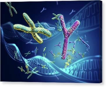 X And Y Chromosomes Canvas Print by Harvinder Singh
