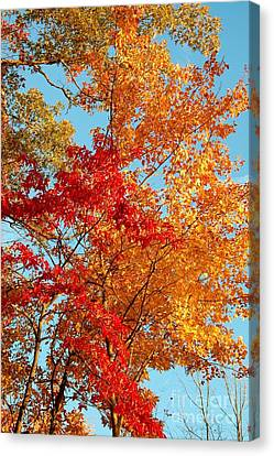 Yellow And Red Canvas Print by Patrick Shupert
